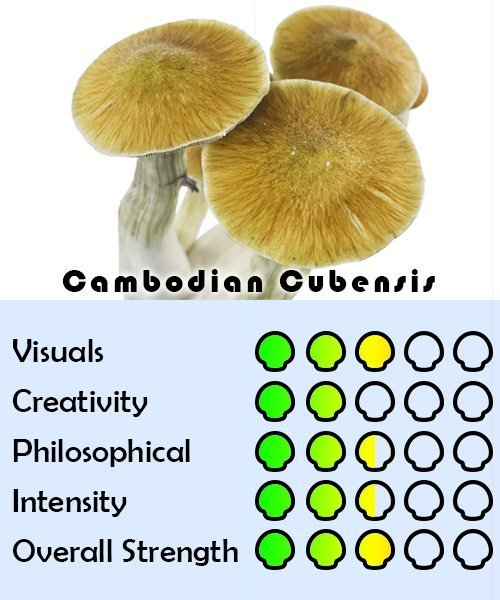cambodian cubensis effects chart image