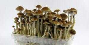 visualizes the end result of growing mushshrooms at home