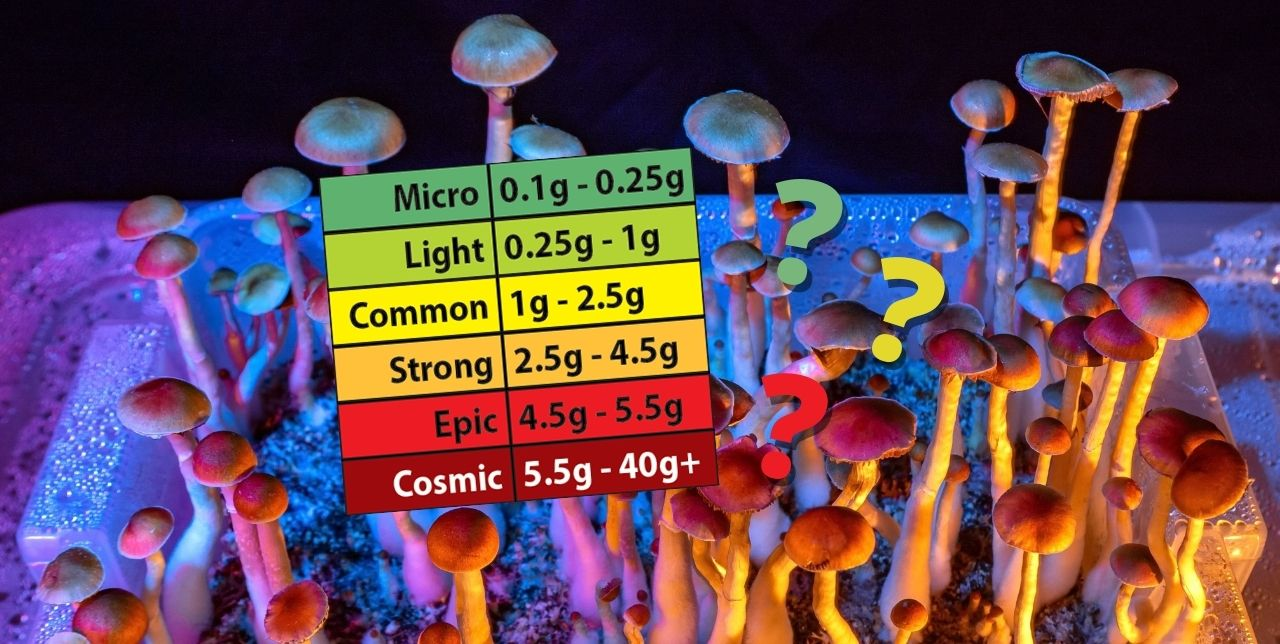 analogizes the question of magic mushrooms dosage with background image of psilocybin cubensis and a foreground of text and icons