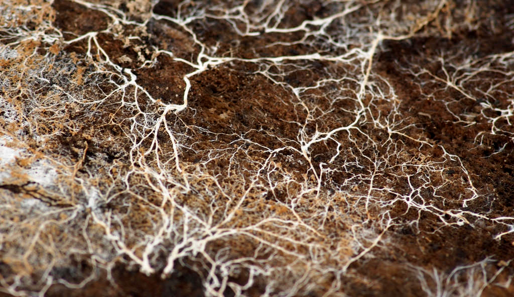 educational; visualizes mycelial network that develops when you grow magic mushrooms