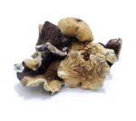 burma magic mushrooms product image