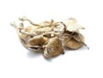amazon magic mushroom | amazonian cubensis image